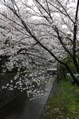 日本櫻花(14) 哲學之道與蹴上鐵道:0851.jpg 哲學之道