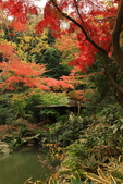 秋之戀(三) 庭園、森林、往事如昨:0147.jpg 六義園