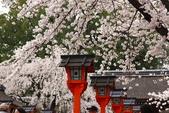 日本櫻花(11) 京都平野神社與嵐山:0704.jpg 平野神社