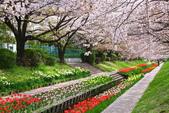 春(2) 藝界人生:0183.JPG 江川せせらぎ緑道