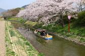 春(3) 似是故人來:0274.JPG 近江八幡水鄉めぐり