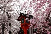 日本櫻花(11) 京都平野神社與嵐山:0705.jpg 平野神社
