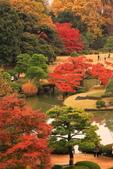 秋之戀(三) 庭園、森林、往事如昨:0141.jpg 六義園