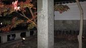 秋之戀(14) 京都秋夜:1285.jpg 京都永観堂