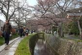 日本櫻花(14) 哲學之道與蹴上鐵道:0836.jpg 哲學之道