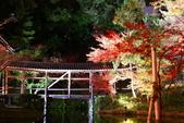 秋之旅(八) 古都夜豔:0657. 京都高台寺