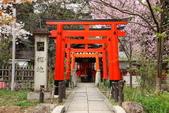 日本櫻花(11) 京都平野神社與嵐山:0706.jpg 平野神社