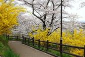 春(7) 美麗的零落:0952.JPG 船岡城址公園