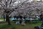 花見(1) 一廂情願:0097.JPG  舞鶴公園