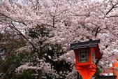 日本櫻花(11) 京都平野神社與嵐山:0707.jpg 平野神社