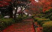 旅 遊 精 選:0939.JPG (2014-12-1 京都 善峯寺 )