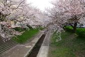 春(2) 藝界人生:0168.JPG 江川せせらぎ緑道
