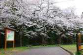 春(7) 美麗的零落:0946.JPG 船岡城址公園