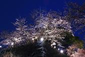 花見(1) 一廂情願:0107.JPG  福岡城跡