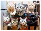 貓咪的五四三 ... 喵 ... :0001.jpg