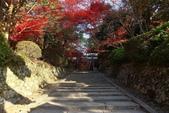 秋之戀(11) 由洛西到洛北:1172.jpg 大原野神社