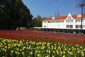 春花(2) 豪斯登堡:0141.JPG 豪斯登堡