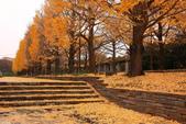 北國之秋(二) 秋詩篇篇:0228.jpg 昭和記念公園