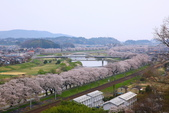 春(7) 美麗的零落:0959.JPG 船岡城址公園