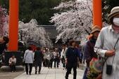 日本櫻花(11) 京都平野神社與嵐山:0708.jpg 平野神社