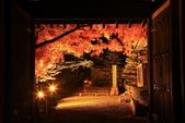 秋之戀(14) 京都秋夜:0867.jpg 坂本地区西教寺