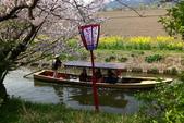 春(3) 似是故人來:0282.JPG 近江八幡水鄉めぐり