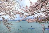春(6) 春的禮讚:0700.JPG 滋賀.海津大崎