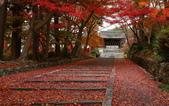 旅 遊 精 選:0066(京都毘沙門堂).jpg
