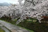 日本櫻花(14) 哲學之道與蹴上鐵道:0855.jpg 哲學之道