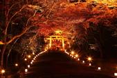 秋之戀(14) 京都秋夜:0849.jpg 坂本地区日吉大社
