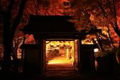 秋之戀(14) 京都秋夜:0868.jpg 坂本地区西教寺