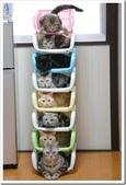 貓咪的五四三 ... 喵 ... :0002.jpg