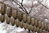 日本櫻花(11) 京都平野神社與嵐山:0709.jpg 平野神社