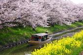 春(3) 似是故人來:0272.JPG 近江八幡水鄉めぐり