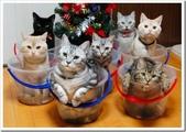 貓咪的五四三 ... 喵 ... :0003.jpg