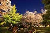 花見(1) 一廂情願:0110.JPG  福岡城跡