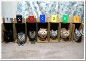 貓咪的五四三 ... 喵 ... :0004.jpg