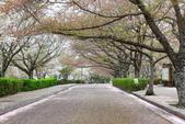 春(5) 幾度花落時:0467.JPG 和らぎの道