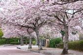 春(5) 幾度花落時:0473.JPG 和らぎの道