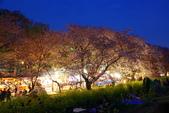 春(1) 似水流年:0035.JPG 熊谷桜堤