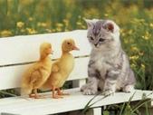貓咪的五四三 ... 喵 ... :0015.jpg