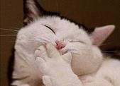 貓咪的五四三 ... 喵 ... :0016.jpg