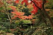 秋之戀(三) 庭園、森林、往事如昨:0148.jpg 六義園