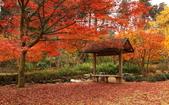 旅 遊 精 選:0126.jpg (2014-11-2 茨城水戸市 偕楽園)