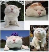貓咪的五四三 ... 喵 ... :0008.jpg