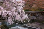 春(5) 幾度花落時:0489.JPG 和らぎの道