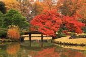 秋之戀(三) 庭園、森林、往事如昨:0139.jpg 六義園