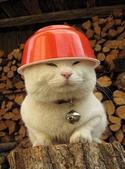貓咪的五四三 ... 喵 ... :0009.jpg