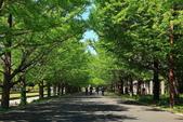 北國之春(8) 春日花海:0643.jpg 昭和記念公園