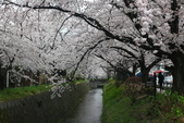 日本櫻花(14) 哲學之道與蹴上鐵道:0852.jpg 哲學之道
